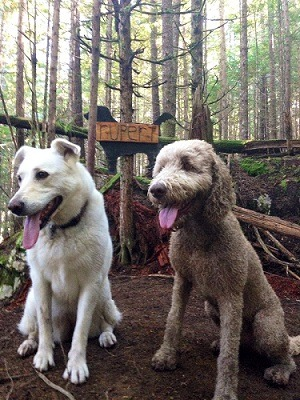 dogs on ruperts trails